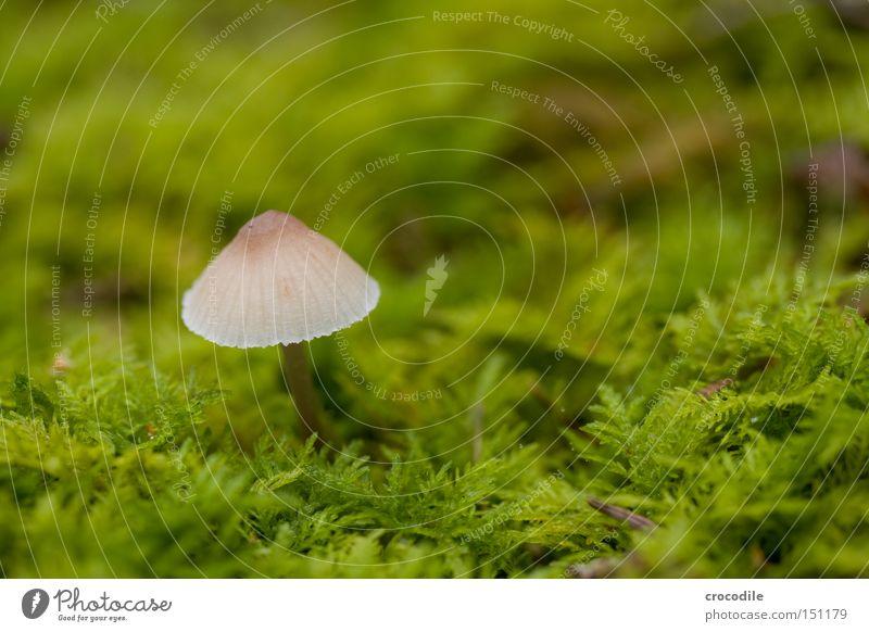 Green Autumn Transience Hat Damp Mushroom Moss Seed Fertile