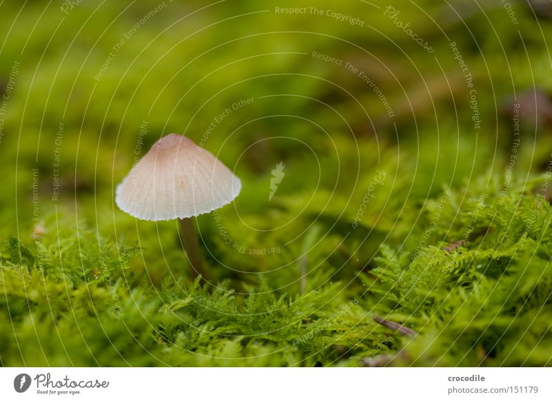 mushy Mushroom Hat Green Moss Damp Fertile Seed Blur Macro (Extreme close-up) Close-up Autumn Transience