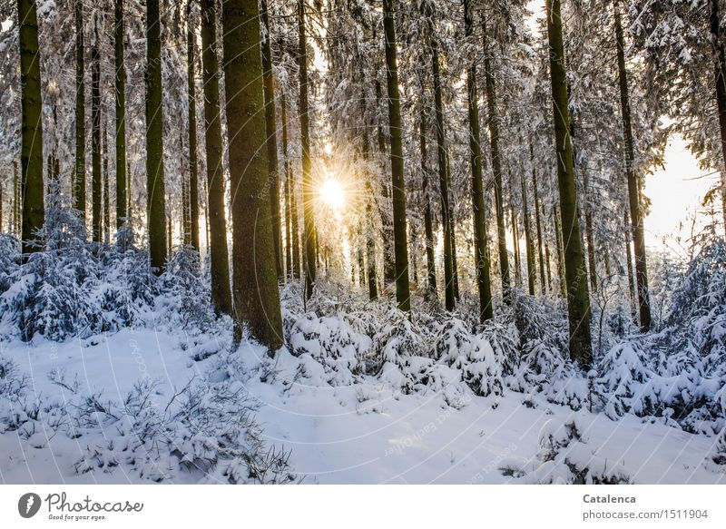 Nature Plant Green White Flower Landscape Calm Winter Forest Black Cold Yellow Snow Wood Brown Going