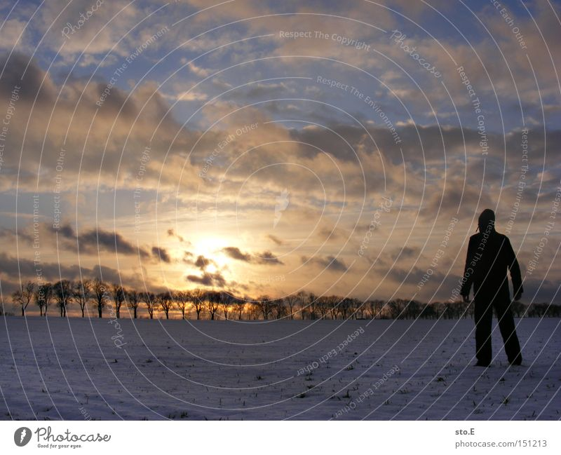 Human being Nature Sky Winter Far-off places Cold Snow Landscape Moody Field Posture Sunset Avenue Brandenburg