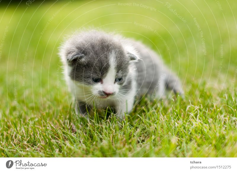 Kitten Cat Green Beautiful Animal Baby animal Love Funny Grass Playing Small Gray Garden Cute Pelt Pet