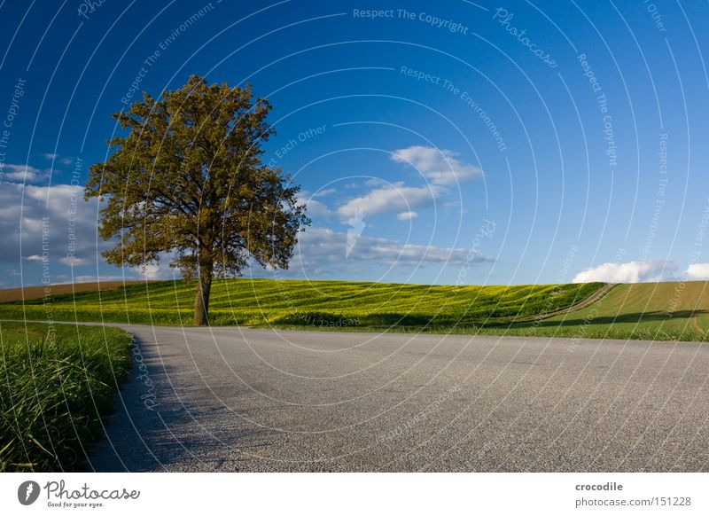 track marshal Tree Autumn Leaf Dyeing Lose Street Transport Clouds Sky Meadow Field Agriculture Build on Traffic infrastructure