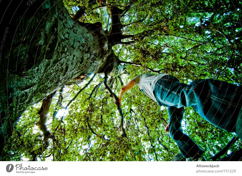 tarzan from the beetle's perspective Forest Nature Tree Leaf Green Leaf canopy Treetop Climbing Tree bark Branch Worm's-eye view Forest-dweller Joy Fisheye