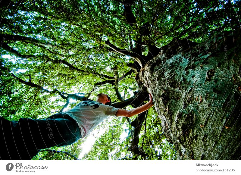 nature boy Forest Nature Tree Leaf Green Leaf canopy Treetop Climbing Tree bark Branch Worm's-eye view Forest-dweller Fisheye Summer
