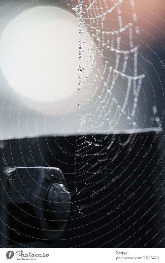 White Loneliness Black Sadness Going Metal Orange Drops of water Screw Spider's web