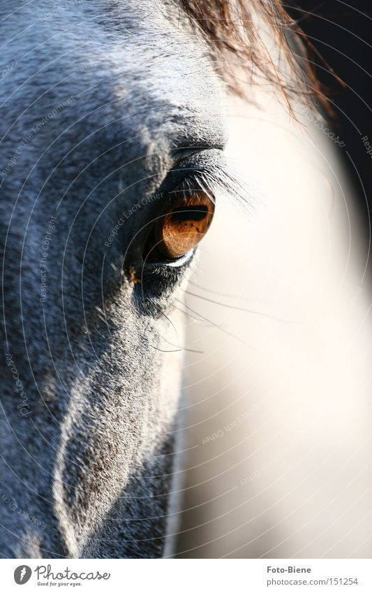 Animal Eyes Horse Pony Eyelash Partially visible Gray (horse) Pupil Horse's head Detail of face Horse's eyes