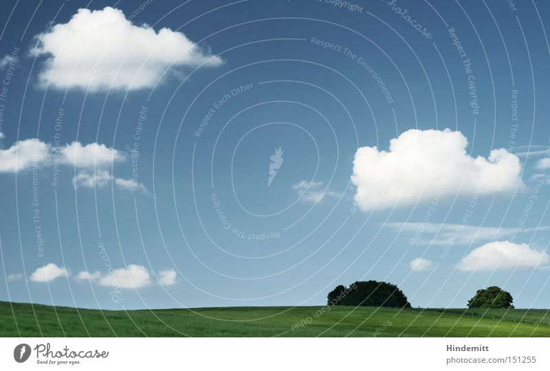 Sky Tree Summer Calm Clouds Relaxation Meadow Warmth Power Field Waves Hill Concentrate
