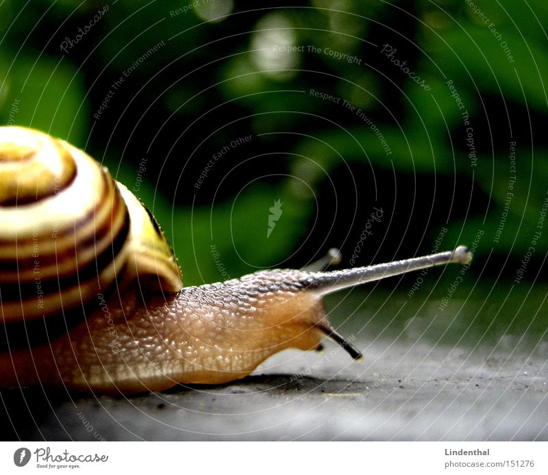snail Snail Feeler House (Residential Structure) Snail shell Crawl Mucus Slowly Disgust