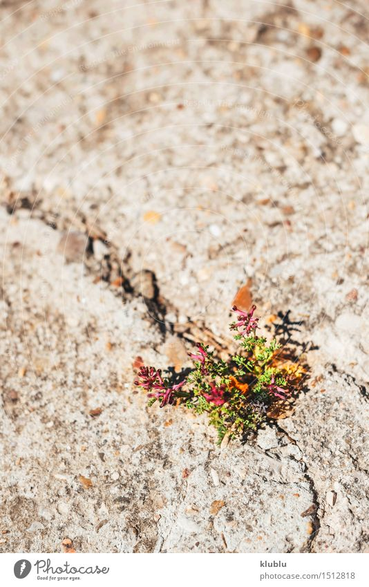 weed growing through crack in pavement Herbs and spices Life Success Nature Plant Drought Grass Leaf Street Concrete Old Growth Natural Strong Gray Green Power