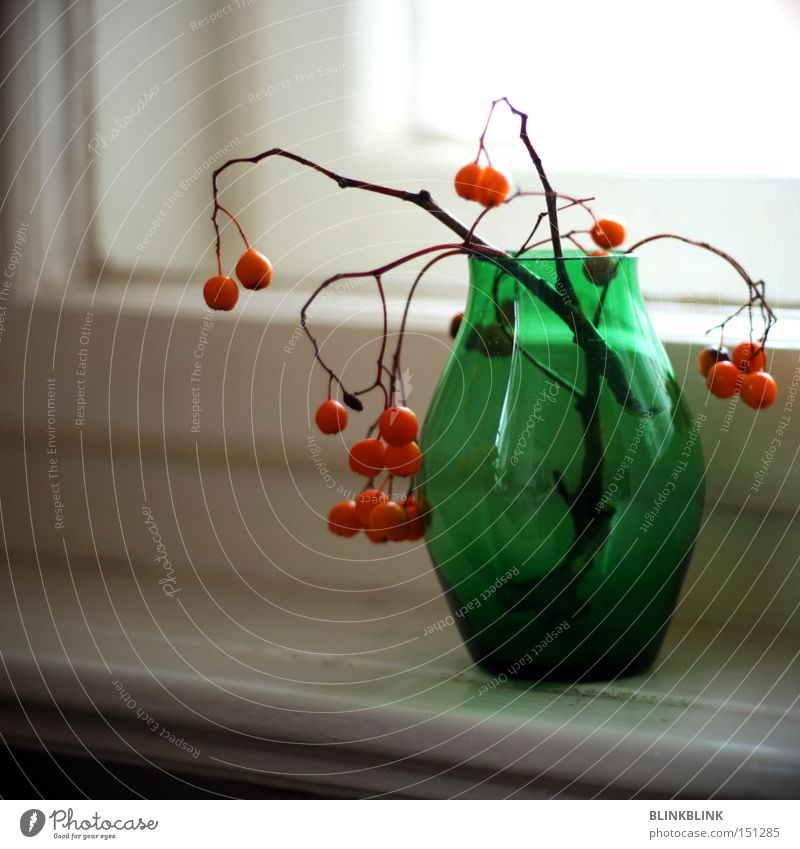 general partner Vase Window board Rawanberry Winter Still Life Green Orange Round Sphere Twig Reflection Glass Decoration Transience