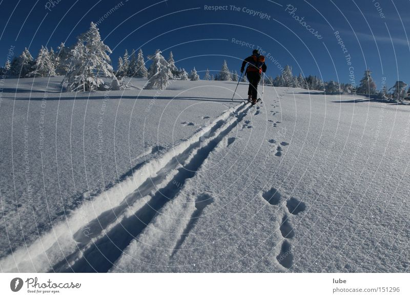 Race rabbit against man Skiing Skis Winter Vacation & Travel Ski tracks Snowscape Lanes & trails Tracks Winter sports Ski tour Skier Hare hunting Snow track