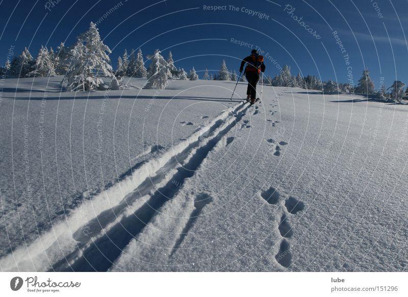 Winter Vacation & Travel Mountain Lanes & trails Skiing Tracks Skis Snowscape Skier Winter sports Ski tour Snow track Ski tracks Hare hunting