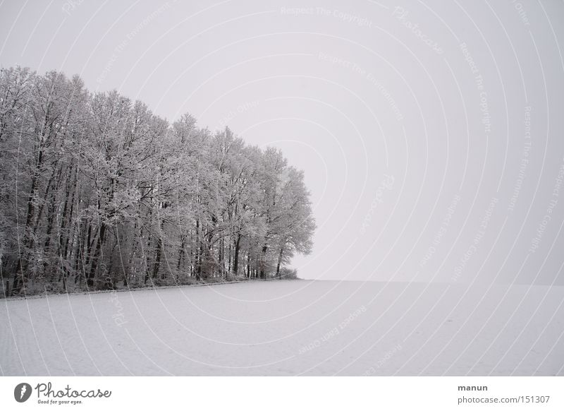 Nature Sky Winter Calm Loneliness Forest Cold Snow Relaxation Death Sadness Landscape Ice Contentment Field Fog