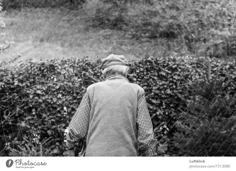 Human being Nature Man Old Adults Life Senior citizen Movement Natural Style Healthy Lifestyle Garden Moody Contentment 60 years and older