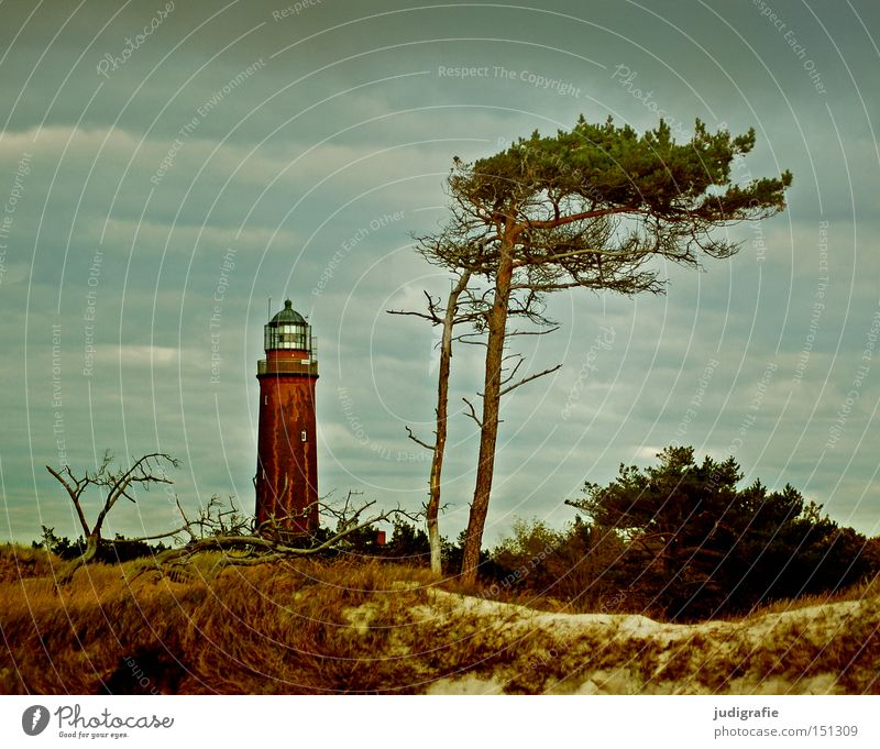 Sky Tree Ocean Beach Vacation & Travel Colour Relaxation Landscape Coast Beach dune Lighthouse Baltic Sea Darss Germany Western Beach Wind cripple