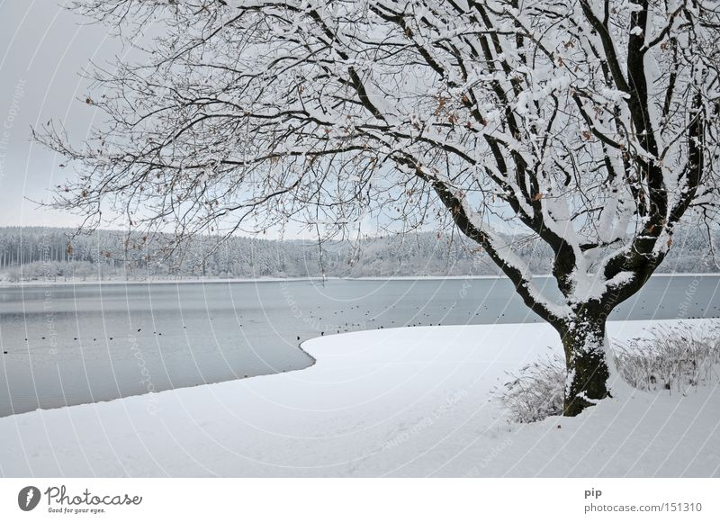hibernation Lake Water Lakeside Forest Tree Winter Snow Ice Cold Frost Dark Shadow Calm Loneliness Nature Branch