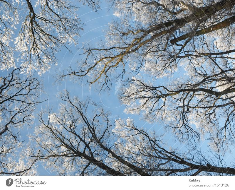 Sky Nature Plant Blue White Tree Winter Cold Environment Snow Ice Beautiful weather Frost Seasons Frozen Cloudless sky