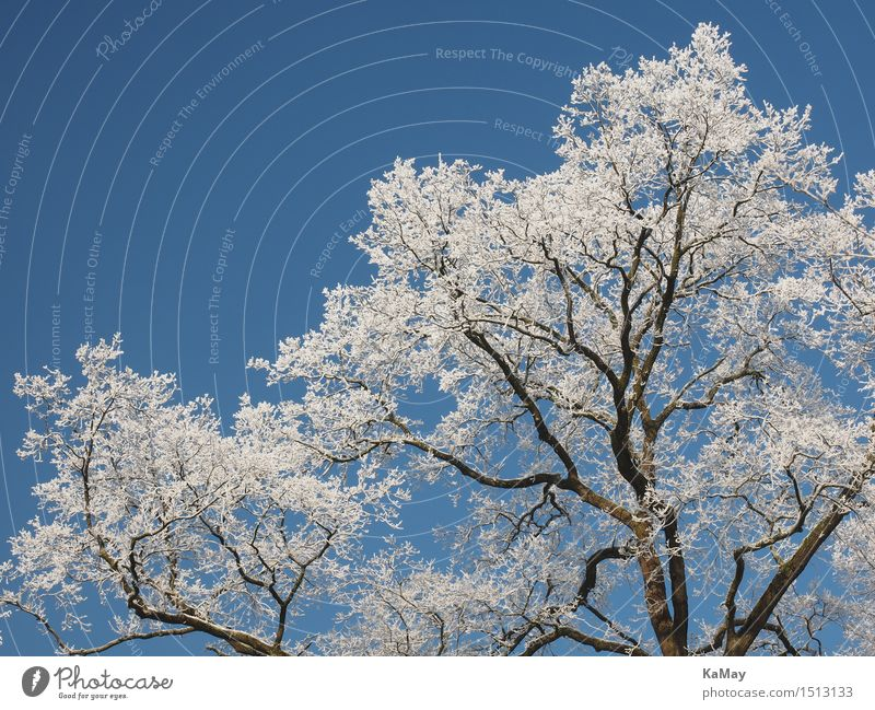 ice white Nature Landscape Plant Sky Cloudless sky Winter Weather Beautiful weather Ice Frost Snow Tree Idyll Cold Climate Environment Hoar frost White