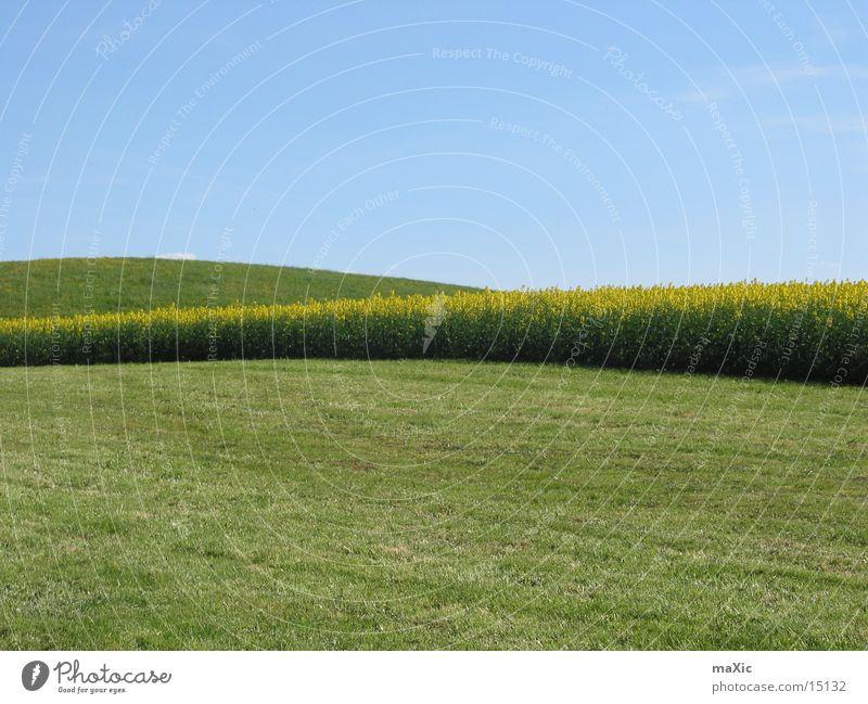 Sky Sun Flower Green Blue Meadow Mountain Landscape Field Horizon Lawn Hill