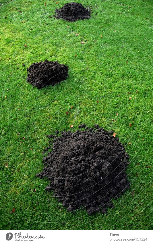 Green Meadow Sand 3 Earth Lawn Heap Characters Mole