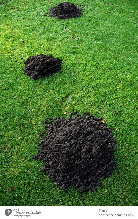 shit heap 3 Earth Meadow Green Heap Mole Lawn Sand dhaufen molehills underground passages