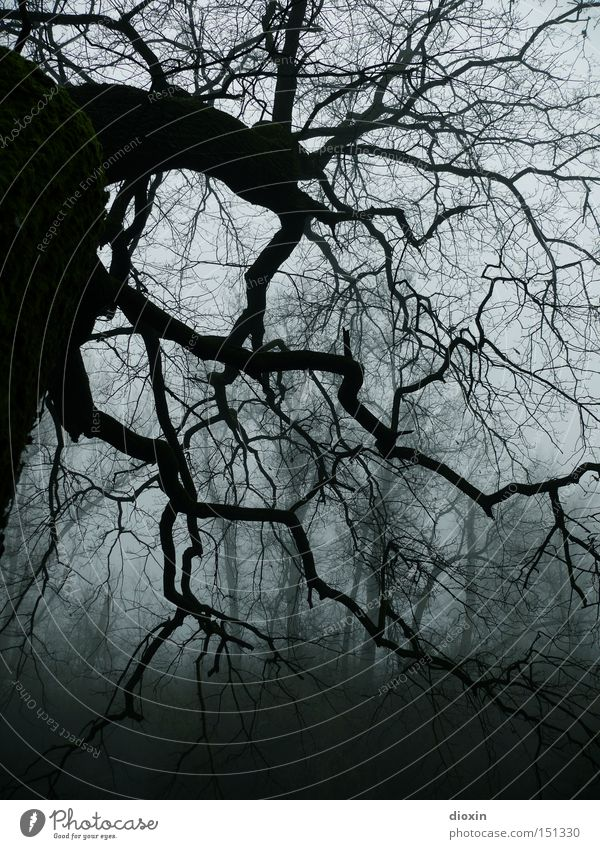 no light is burning... Old Tree Forest Dark Cold Park Fear Fog Wet Frost Threat Branch Creepy Panic Eerie Horror