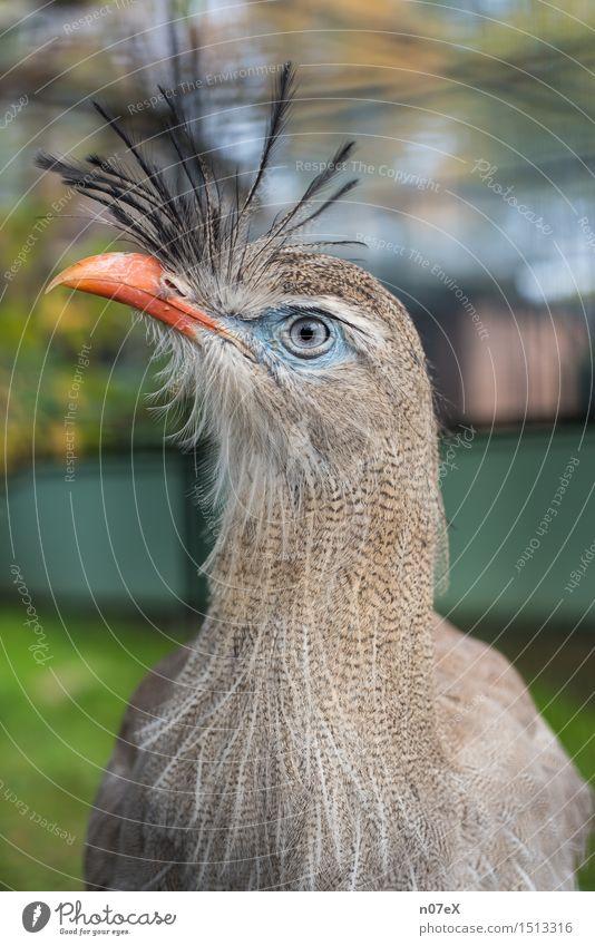 bird Elegant Exotic Nature Animal Hair and hairstyles Punk Wild animal Bird Zoo 1 Observe Looking Cool (slang) Hip & trendy Beautiful Blue Gray Green Orange