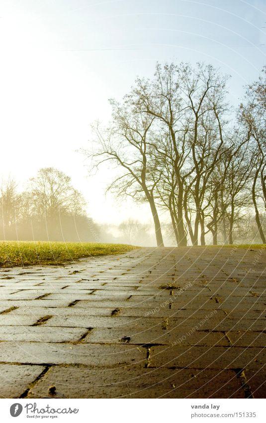 Nature Tree Winter Loneliness Landscape Meadow Autumn Lanes & trails Garden Park Fog Lawn Brick Boredom