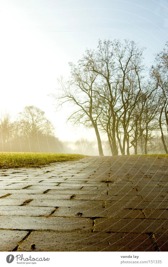 Park II Landscape Tree Meadow Lawn Garden Lanes & trails Autumn Winter Loneliness Nature Fog Brick Boredom