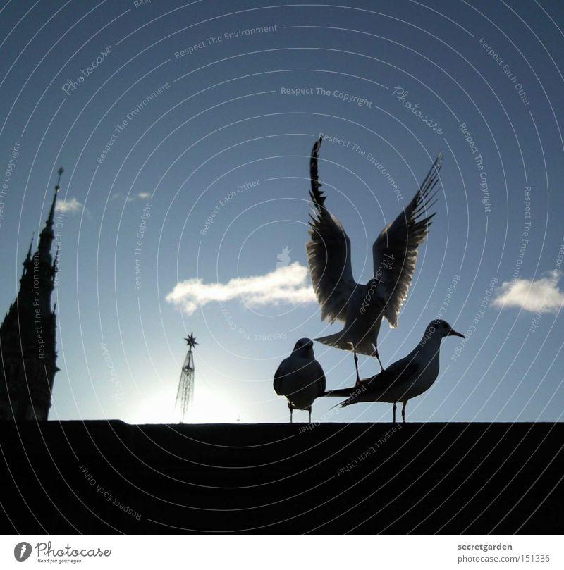 Sky Blue Sun Winter Black Cold Wall (barrier) Bird Under Seagull Traffic infrastructure Judder
