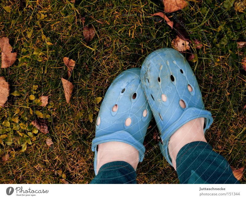 Socks are luxury Footwear Shuffle Blue Autumn Garden Gardener Meadow Leaf Feet Barefoot Legs Boredom Juttas snail
