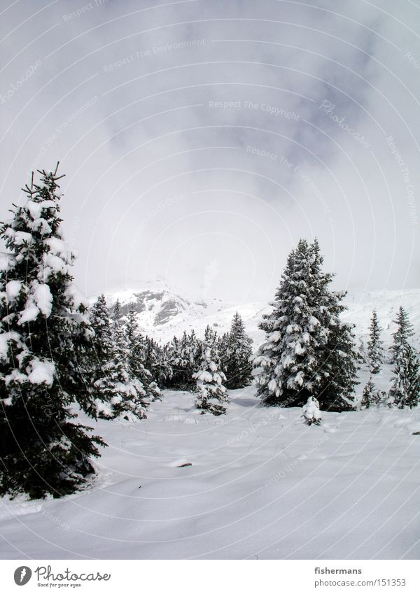 White Winter Forest Cold Snow Mountain Gray Fog Tree Fir tree High plain