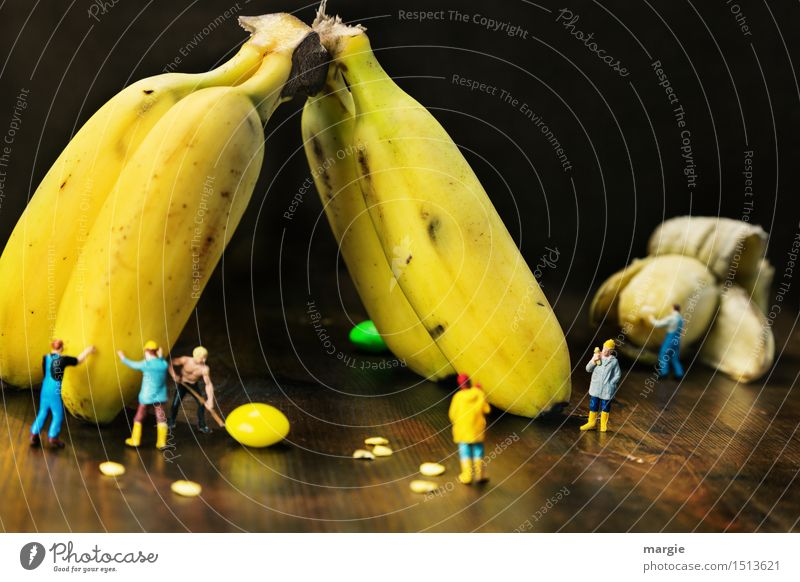 Mini - Worlds Banana Harvest Fruit Nutrition Organic produce Vegetarian diet Diet Work and employment Profession Craftsperson Gardening Workplace