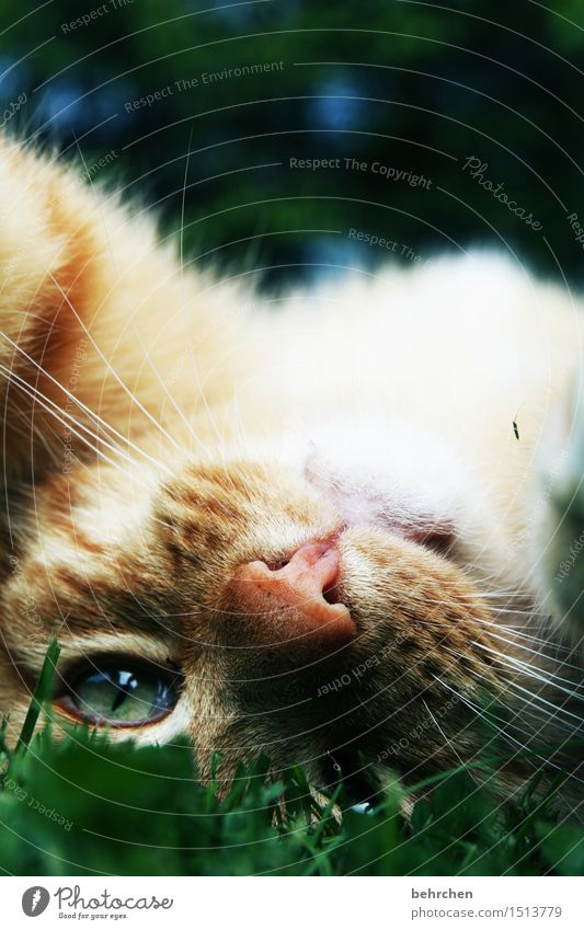 scratch me, now! Nature Summer Beautiful weather Garden Park Meadow Pet Cat Animal face Pelt Eyes Nose Whisker 1 Observe Relaxation Playing Purr Caress Stroke