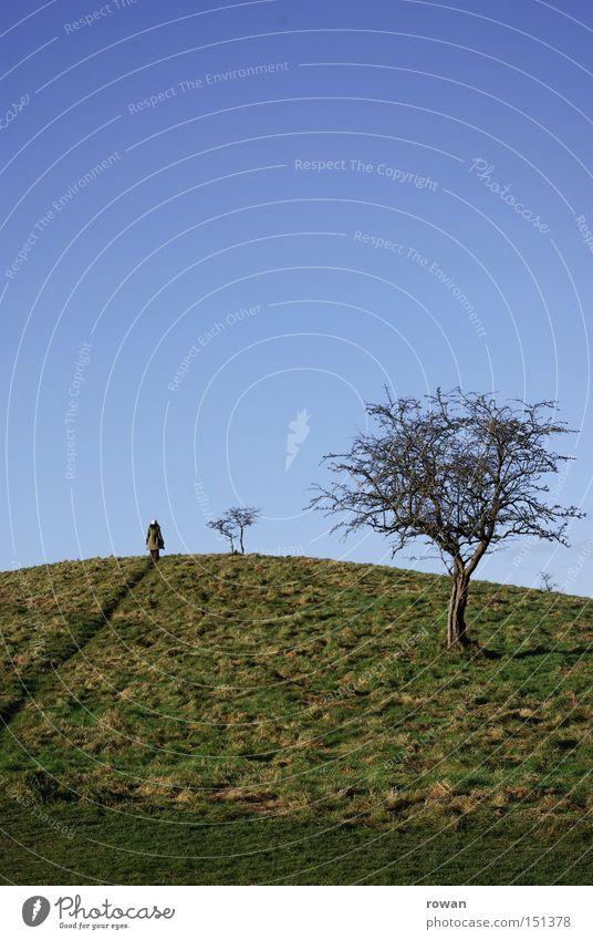 wanderer Tree Set Hill Bushes Winter Hiking Lanes & trails Landscape To go for a walk Novella Fairy tale Footpath hilltop