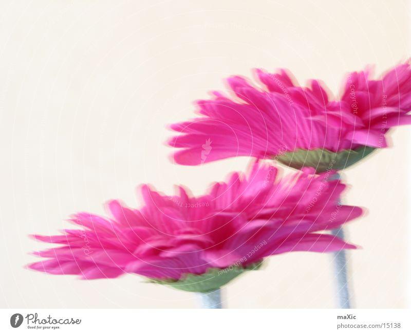 Nature Flower Plant Blossom Power