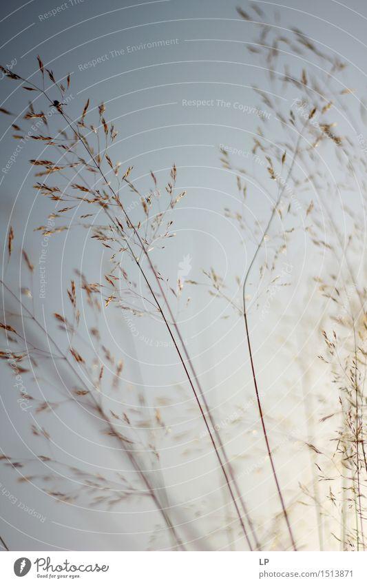 pale Nature Plant Beautiful Relaxation Calm Joy Environment Warmth Emotions Autumn Spring Meadow Feminine Garden Park Wild