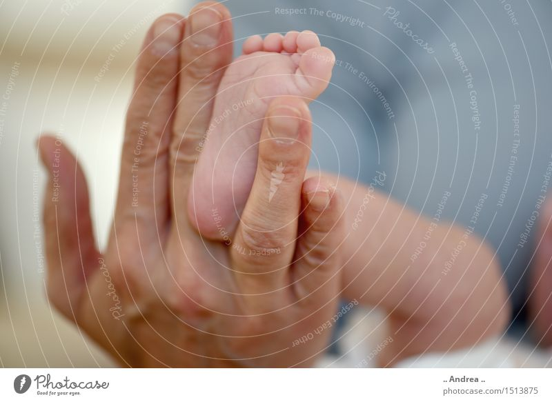 Hand Joy Warmth Family & Relations Happy Feet Contentment Happiness Baby Fingers Joie de vivre (Vitality) Touch Protection Safety Mother Trust