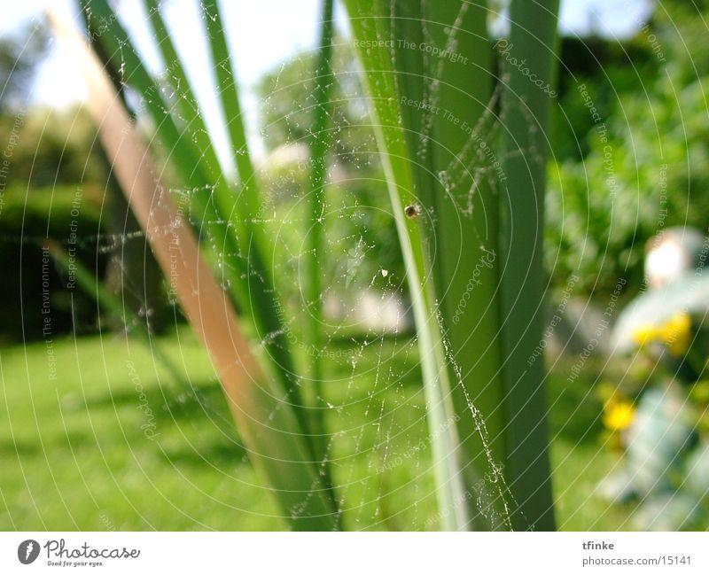 Net Spider Spider's web