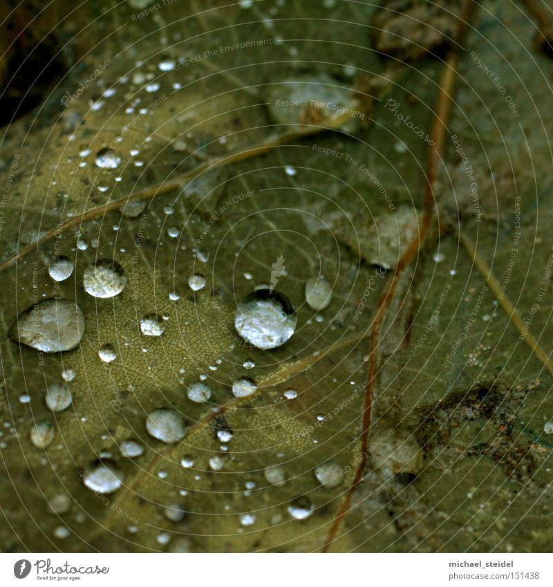 Natural aesthetics in detail Leaf Green Drops of water Rain Dew Wet Brown
