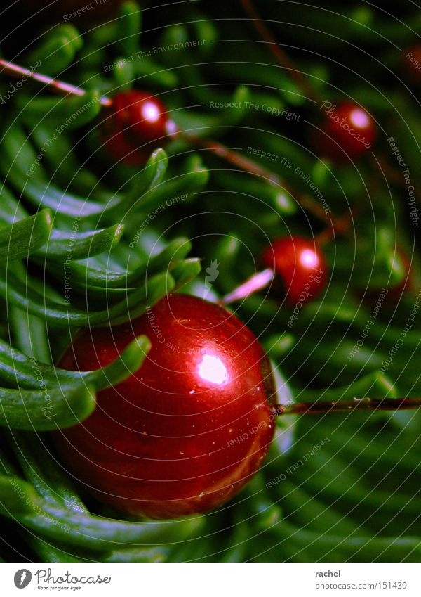 Colours of the season Decoration Fir branch fir green Sphere Glittering Kitsch Round Green Red Anticipation Warm-heartedness Cozy Homey Pearl Mother-of-pearl