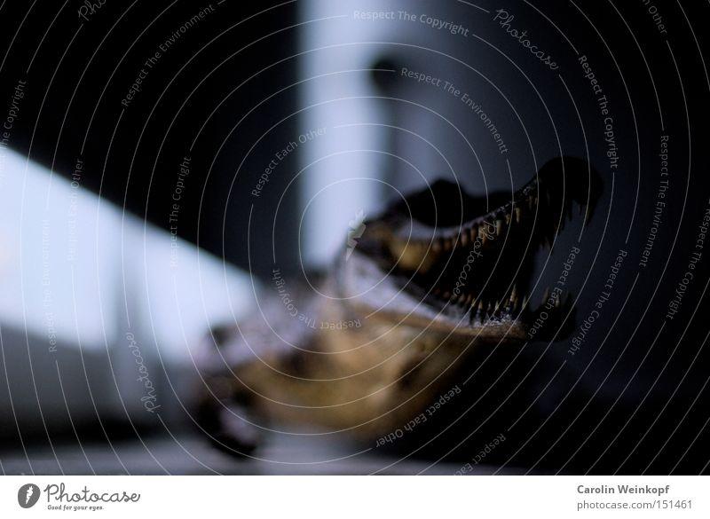 Dangerous Threat Obscure Pet Monster Window board Alarming Crocodile