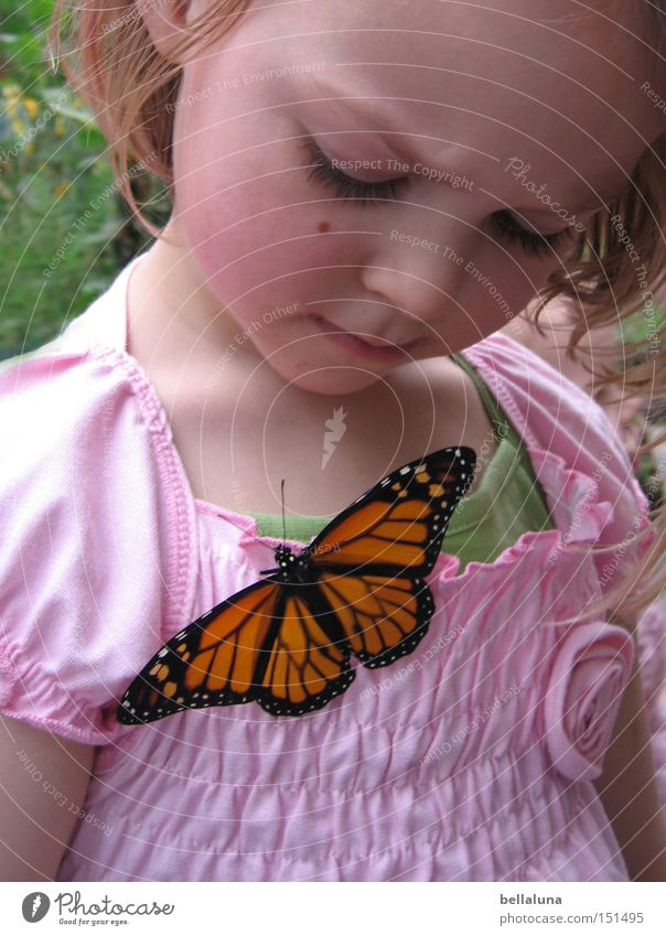 Child Plant Girl Joy Life Emotions Happy Blonde Sit Cute Observe Wing Butterfly Feeler Wonder