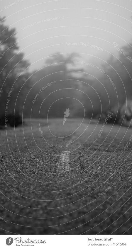 Street Fear Fog Longing Traffic infrastructure Wanderlust Eerie Spooky Corsica