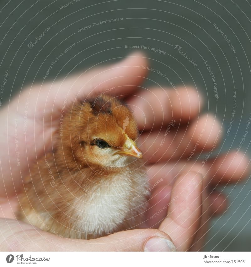 Hand Animal Baby animal Life Love Happy Small Freedom Bird Skin Feather Wing Protection Safety Delicate Egg