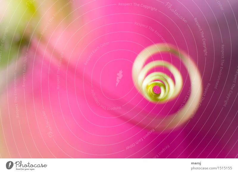 A twisted colour frenzy Nature Plant Tendril shoot tendril Part of the plant Spiral Rotate Gaudy Pink Colour photo Multicoloured Exterior shot Close-up Detail