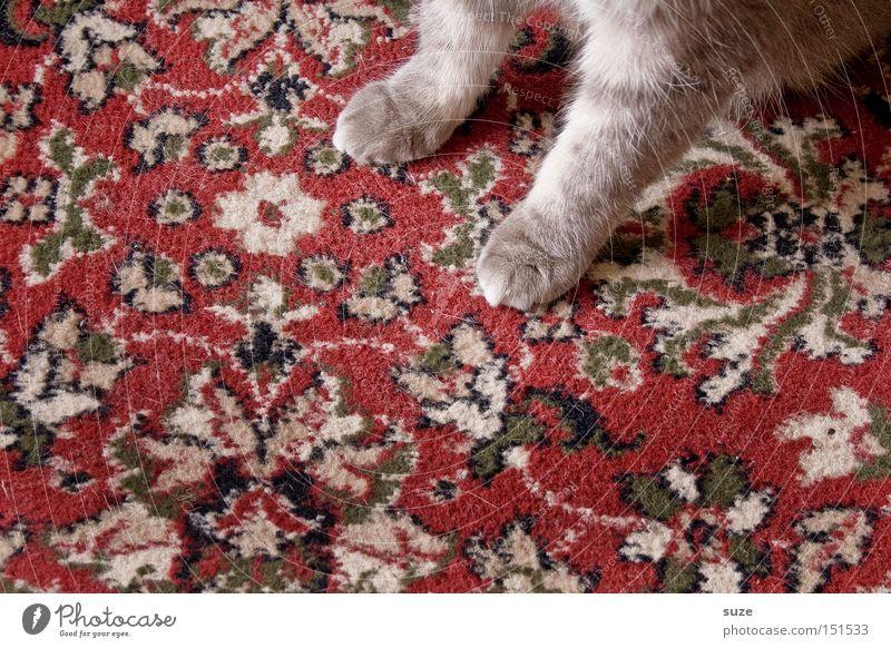 Cat Old Animal Gray Wait Sit Cloth Pelt Kitsch Pet Paw Mammal Cuddly Carpet Domestic cat Ornament