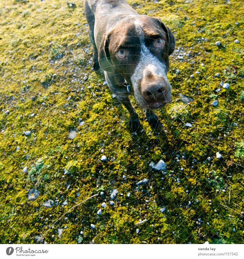 Green Animal Snow Autumn Above Dog Stone Broken Trust Hunting Moss Mammal Hunter Error Apology Stunned