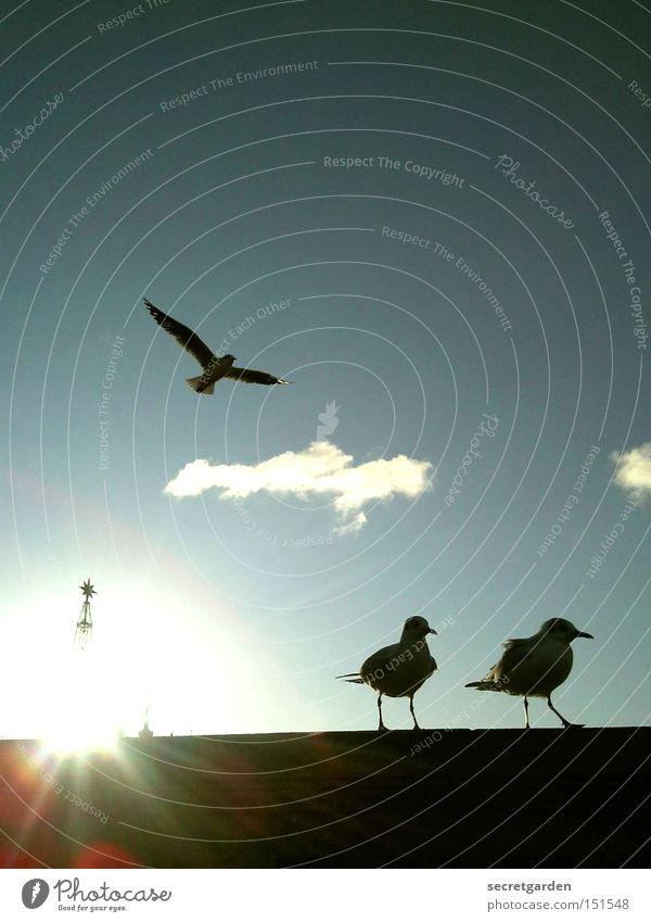 the three musketeers. Seagull Beautiful weather Wall (barrier) Silhouette Sun Judder Cold Winter Under Blue Black Back-light Bird Religion and faith