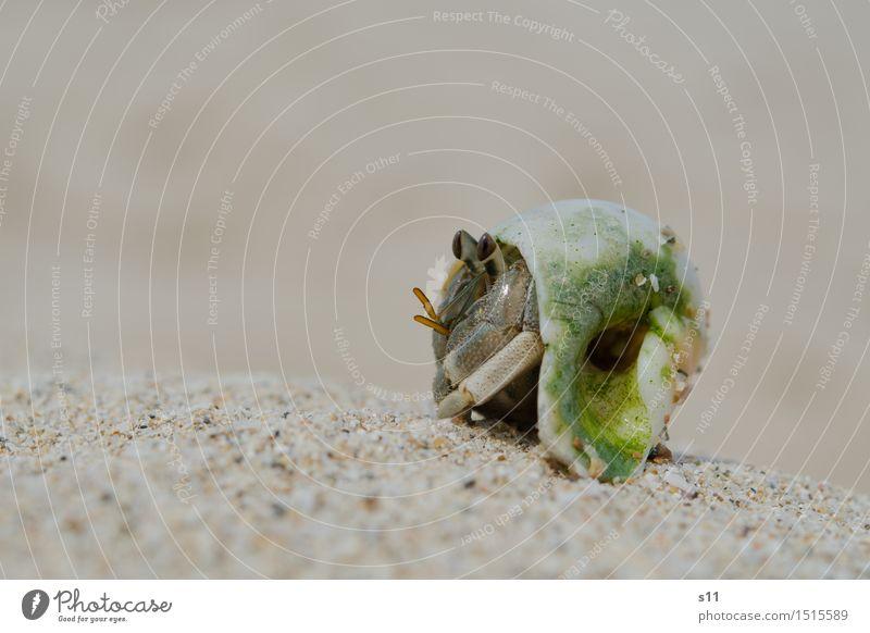 Green Animal Beach Eyes Funny Legs Sand Wild animal To enjoy Observe Sunbathing Watchfulness Animal face Crawl Caution Disgust